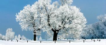 f_winter2